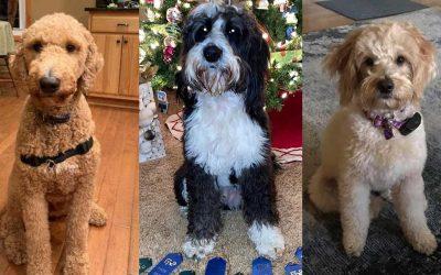 CEU Workshop – Therapy Dog Benefits