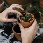 Picture of the hands of a young woman potting a succulent cactus in a small pot. Here's a list of simple activities you, and your loved ones, can do to have fun, and get through the coronavirus pandemic. And, maybe improve yourself in the process! Call Barrington Behavioral Health and Wellness to schedule your appointment 888-261-2178