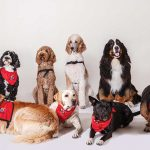 "10 Therapy Dogs of all different breeds sitting patiently to help someone just like you! Join Dr. Denise Casey and Elderwerks Educational Services online for a special National Dog Day Webinar, ""The Benefits of Therapy Dogs for Health and Well-Being"". To Register, Email events@elderwerks.org"