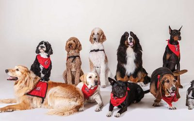 The Benefits of Therapy Dogs